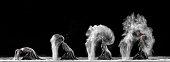 Ballet Dancer Concept on Stage - 2017