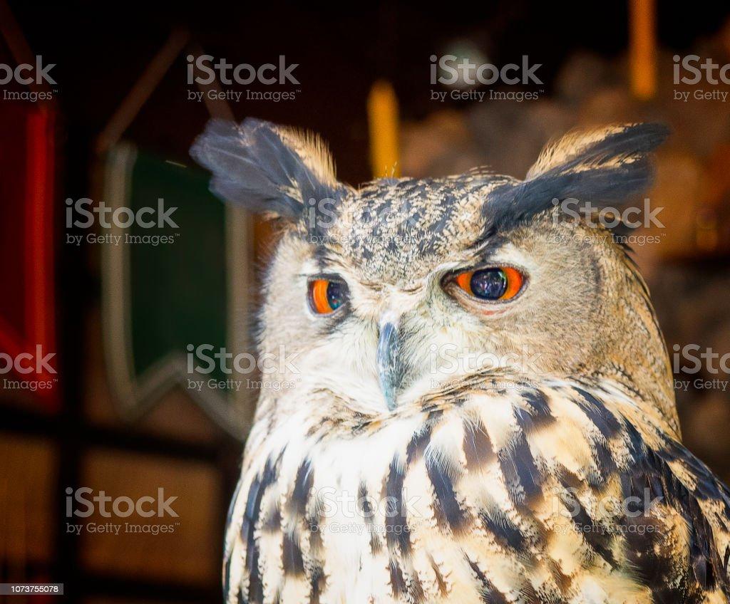 Beautiful Barn Owl Stock Photo Download Image Now Istock