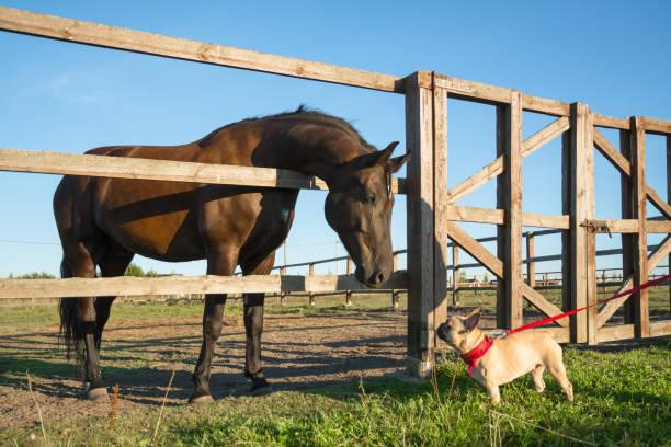Beautiful bay horse and dog with interest looking at each other picture id925103990?b=1&k=6&m=925103990&s=612x612&w=0&h=vn9gxcy7yfcv8vrsvsgwagrk8q3j1zs 6hlfx0ltkwq=