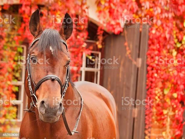Beautiful bay sportive horse autumn portrait picture id452509091?b=1&k=6&m=452509091&s=612x612&h=13wxr2cj5iuf8ghp2dub35pgbxr5nb h0rfvz3isr0m=
