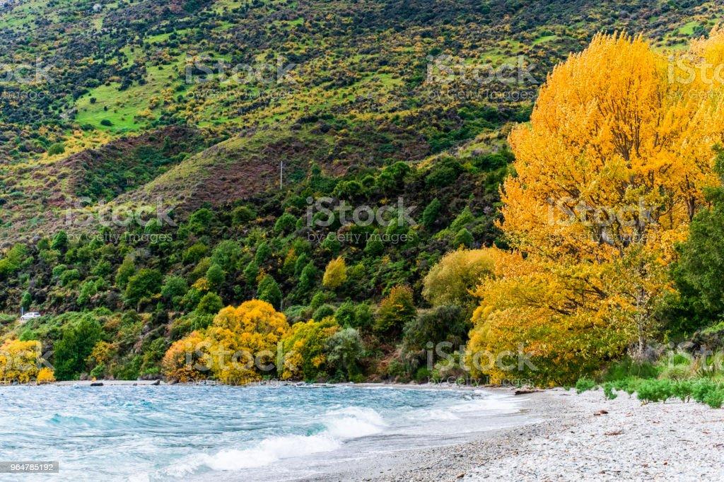 Beautiful Beach in Autumn with fresh water and yellow leafs trees  beside lake Wakatipu. royalty-free stock photo