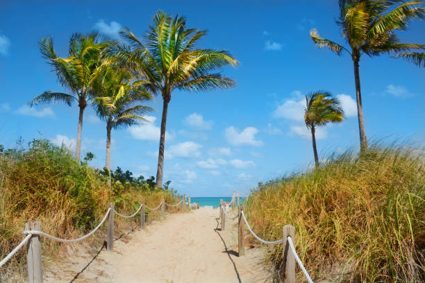 Beautiful beach landscape with palm trees. stock photo
