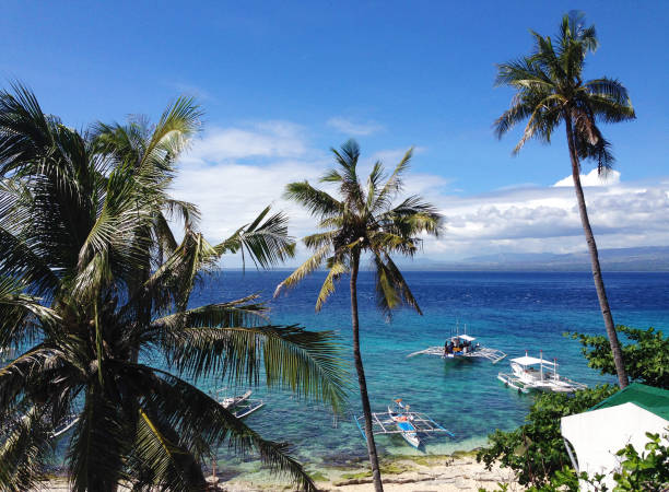 beautiful beach on Apo Island, near Dumaguete, Negros Oriental, Philippines tropical beach apothegm stock pictures, royalty-free photos & images