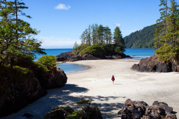 Beautiful Beach on Pacific Coast Beautiful view on the Pacific Ocean Coast during a sunny summer day. Taken in San Josef Beach, Cape Scott, Vancouver Island, BC, Canada. vancouver island stock pictures, royalty-free photos & images