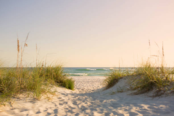 beautiful beach - sand dune stock photos and pictures