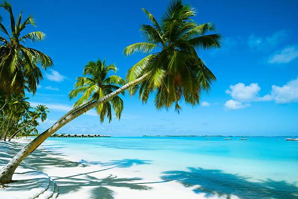 Beautiful beach resort picture id171579629?b=1&k=6&m=171579629&s=612x612&w=0&h=lbtj6eqqprzy3bip4bwqoyqrfq0awdcnkygpvu7rdos=