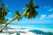 美しいビーチリゾート