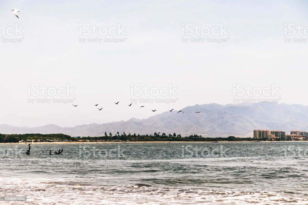 beautiful beach view with birds stock photo