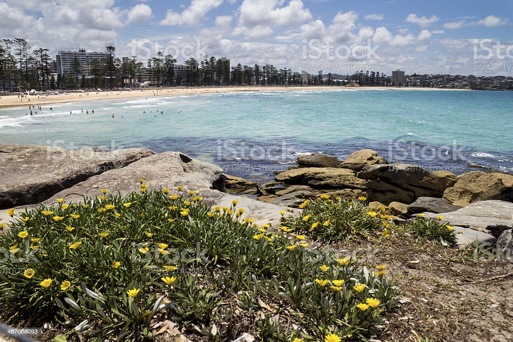 Beautiful beach with a flower bed in Manly stock photo