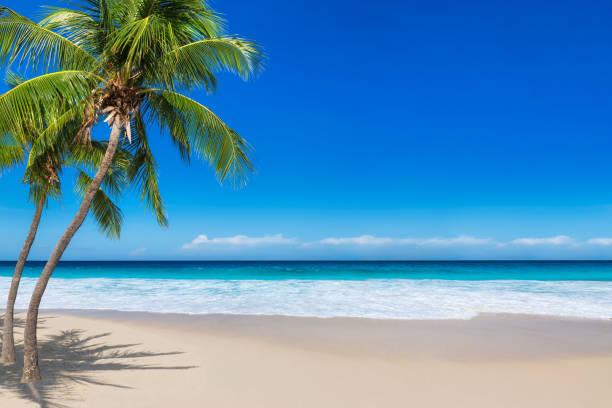 Beautiful beach with coco palms stock photo