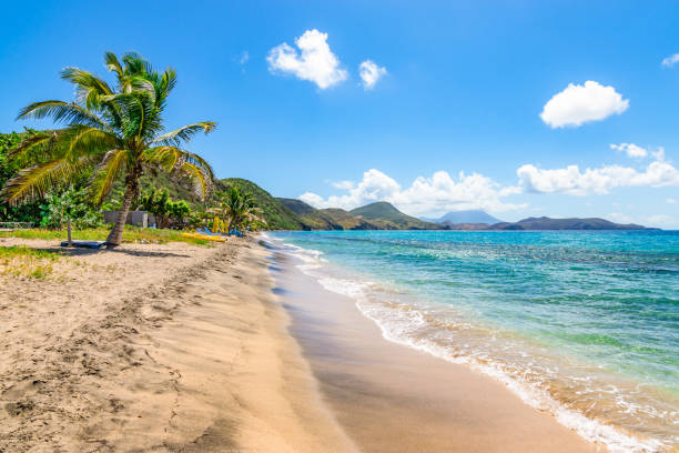 beautiful beach with palm tree, st kitts - caribbean stock pictures, royalty-free photos & images