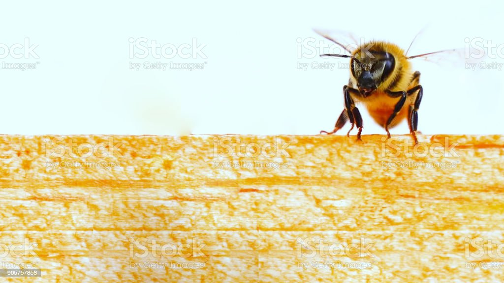 Mooie Bee over to Fly - Royalty-free Bee Fly Stockfoto