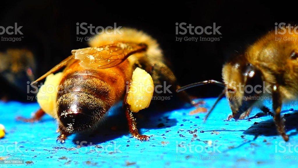 Mooie Bee, bijenteelt, Bijenkorf - Royalty-free Bee Fly Stockfoto