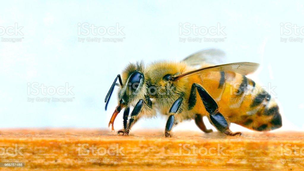 Mooie Bee, bijenteelt - Royalty-free Bee Fly Stockfoto