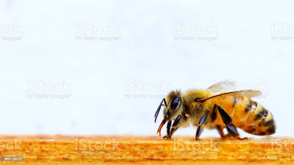 Mooie Bee, bijenteelt - Royalty-free Bee Fly Stockfoto