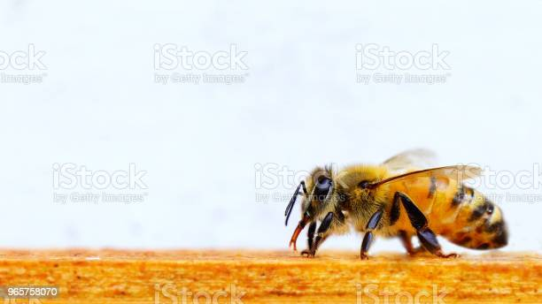 Beautiful Bee Beekeeping Stock Photo - Download Image Now