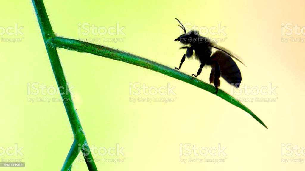 Beautiful Bee on a plant - Royalty-free Ant Stock Photo