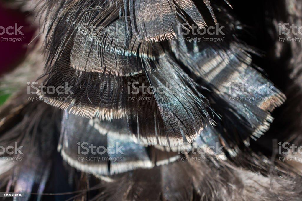Mooie vogel veren voor decoratieve doeleinden - Royalty-free Blauw Stockfoto