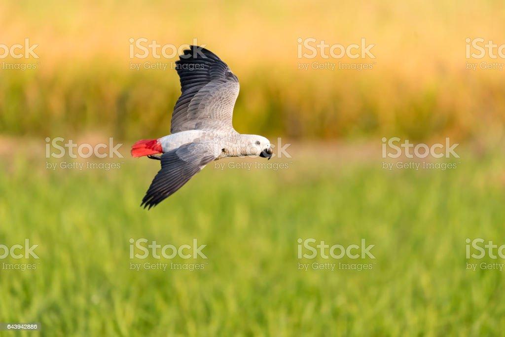 beautiful bird flying in nature farm stock photo