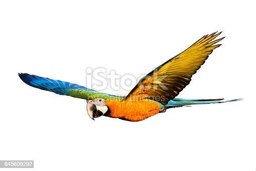 Magnifique oiseau qui vole sur fond blanc photos et plus d 39 images de aile d 39 animal istock - Jeux d oiseau qui vole ...