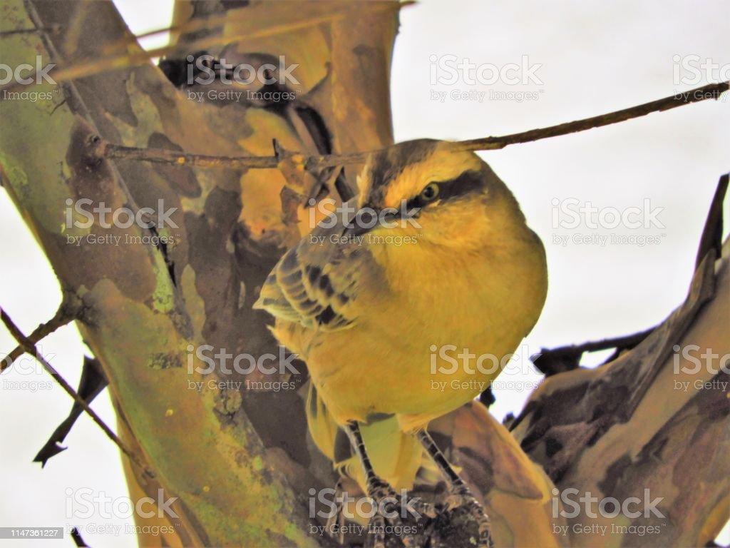 Beautiful bird in nature on the tree. Wildlife's scenery. Animal's...