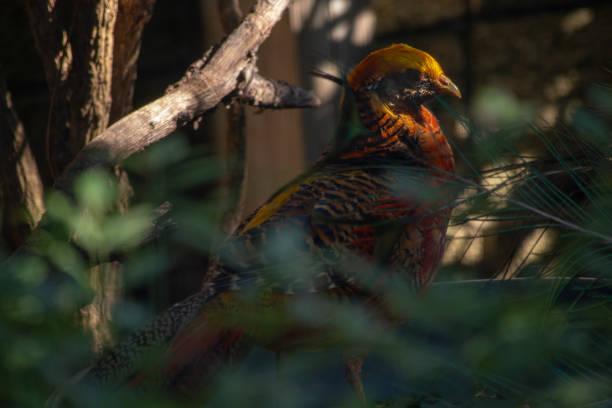 Beautiful Bird in Nature stock photo