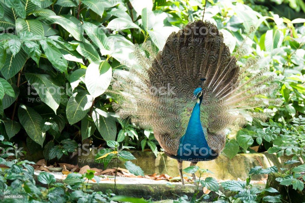 beautiful bird in park stock photo