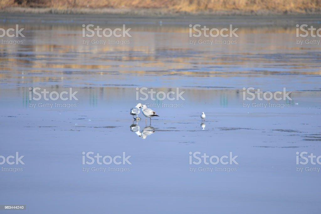 Sulak bir güzel kuş - Royalty-free Balıkçıl Stok görsel