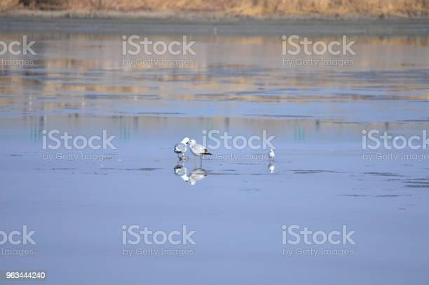 Sulak Bir Güzel Kuş Stok Fotoğraflar & Balıkçıl'nin Daha Fazla Resimleri