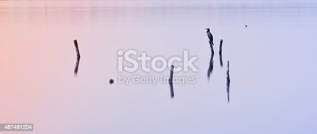477312602istockphoto Beautiful bird resting on a wooden picket in a lake 487481204