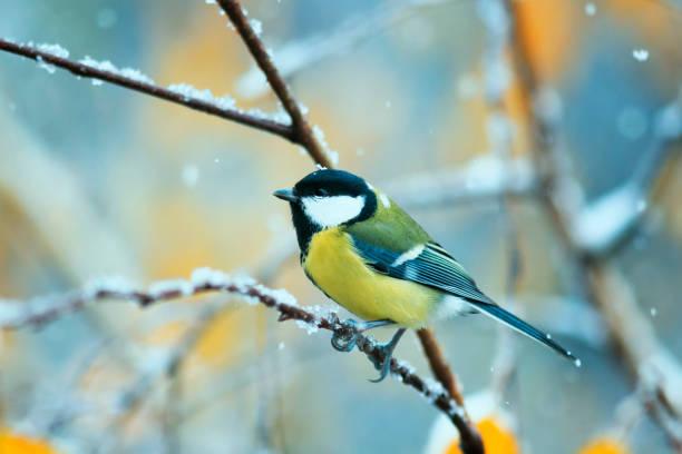 Beautiful bird sitting in the late autumn in the park on a branch of picture id869080784?b=1&k=6&m=869080784&s=612x612&w=0&h=7dk6 w1qqb1auf59nafz3 gzr2lpfbzy0kemxcetja0=