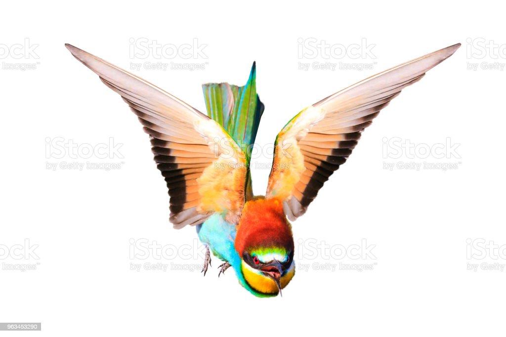 beyaz izole açık kanatlı güzel kuş - Royalty-free Arka planlar Stok görsel