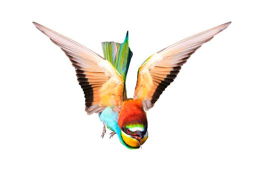Beyaz Izole Açık Kanatlı Güzel Kuş Stok Fotoğraflar & Arka planlar'nin Daha Fazla Resimleri