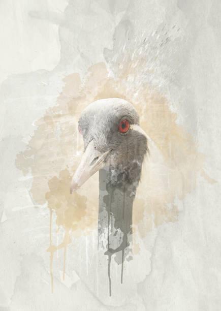 schöner vogel mit roten augen - pfau bilder stock-fotos und bilder