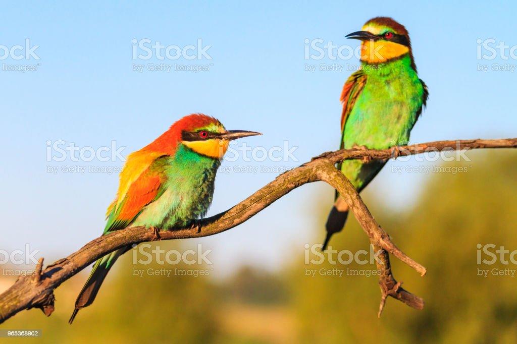 beaux oiseaux dans les rayons du matin - Photo de Abeille libre de droits
