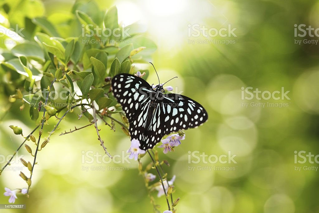 Beautiful black and white spotted Papilio butterfly in a park stock photo