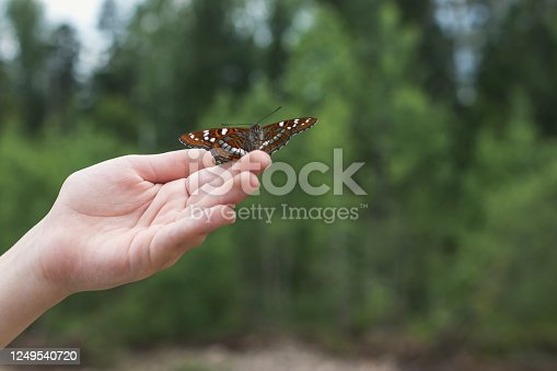 istock A beautiful black butterfly sits on the hand of a small child on a background of lush greenery. 1249540720