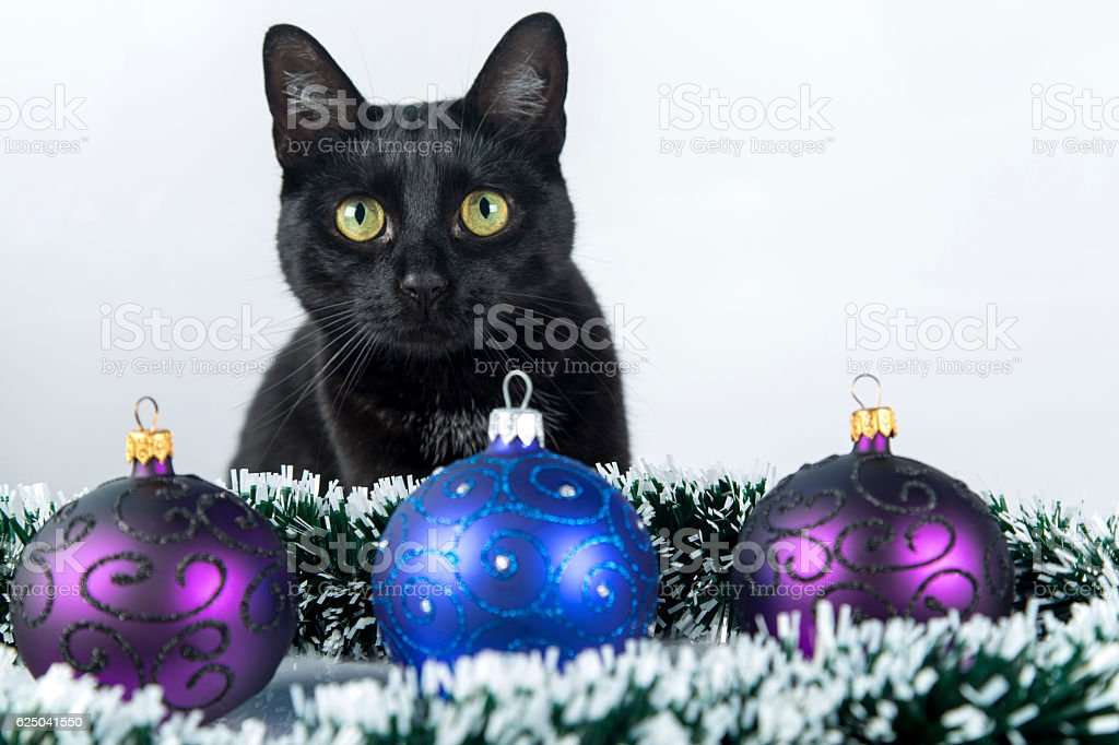 Beautiful black cat lies on the Christmas ornaments, decorations stock photo