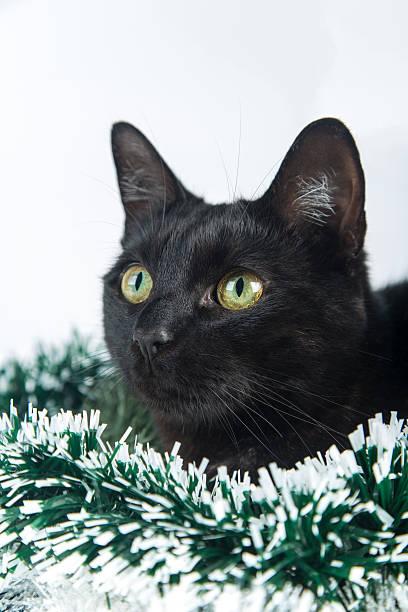 Beautiful black cat lies on the christmas ornaments decorations picture id625041718?b=1&k=6&m=625041718&s=612x612&w=0&h=zyuwd4r1bcq1pkzkewl0msxzbe4hhsikfug3fdpits4=