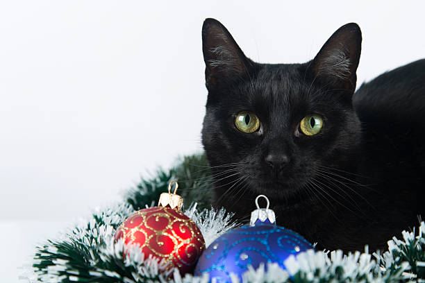 Beautiful black cat lies on the Christmas ornaments, decorations
