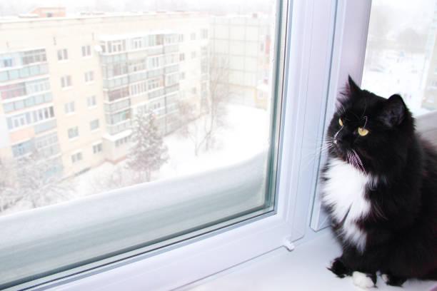 Beautiful black cat looking out window behind which snowy winter snow picture id928529966?b=1&k=6&m=928529966&s=612x612&w=0&h=siezdog9x8bcr4tan6tpq xsv uvvf2k3s9wextqtty=