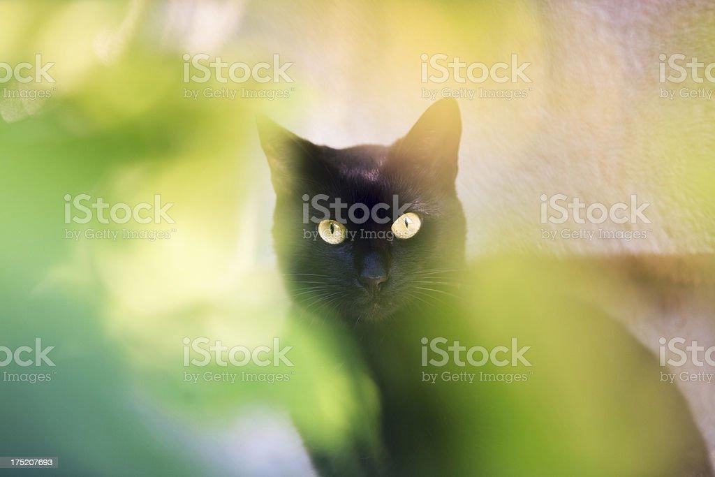Beautiful Black Cat stock photo