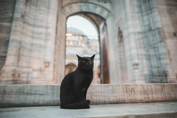 Beautiful black cat sitting near old suleymaniye mosque in istanbul picture id942628128?b=1&k=6&m=942628128&s=612x612&w=0&h=chex1yz0l32w2a 292og 6n 1njrte1whwjeszomkls=