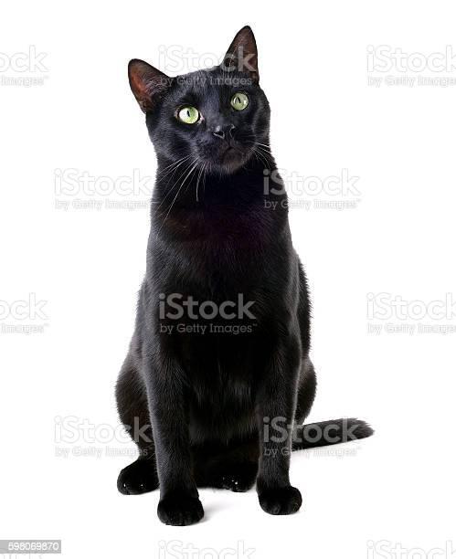 Beautiful black cat sitting picture id598069870?b=1&k=6&m=598069870&s=612x612&h=66c1bnsqeq euatwipsgdqzddva wuwa7fgiyay0wwy=