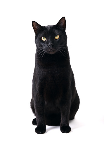 Beautiful Black Cat Sitting Stock Photo Download Image Now Istock