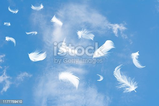 526788679istockphoto Beautiful black feathers floating in air on sky 1177759410