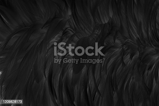 An open owl's wing with a black background... copy space.