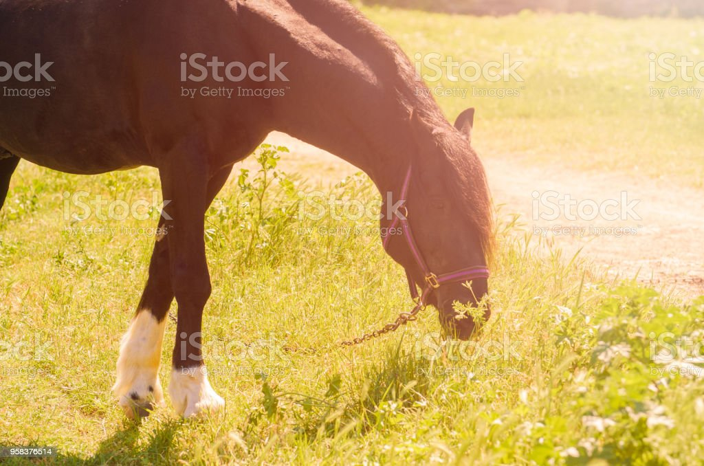 Beautiful Black Horse Outdoors The Concept Of Riding Stock Photo Download Image Now Istock