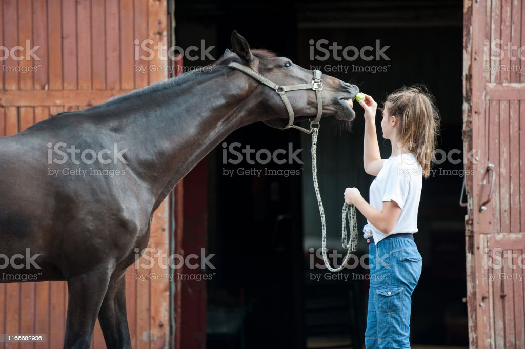 Beautiful Black Horse Treats From Young Teenage Girls Hand Stock Photo Download Image Now Istock