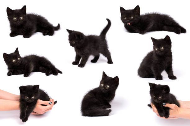 Beautiful black kitten on a white background stock photo